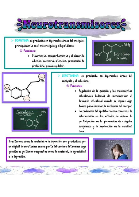 Neurotransmisores Y Sus Funciones Psicología Clínica Neurotransmisores Udocz